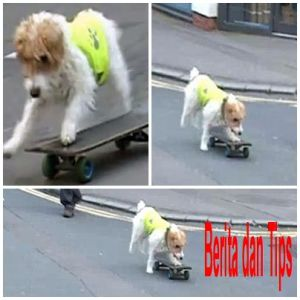 bodhi bermain skateboard
